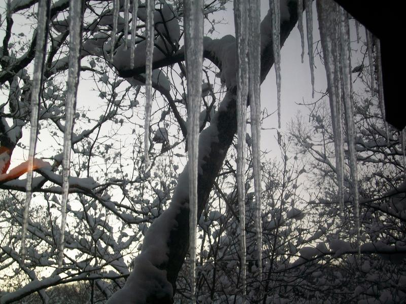 Icicles hanging on the cabin!
