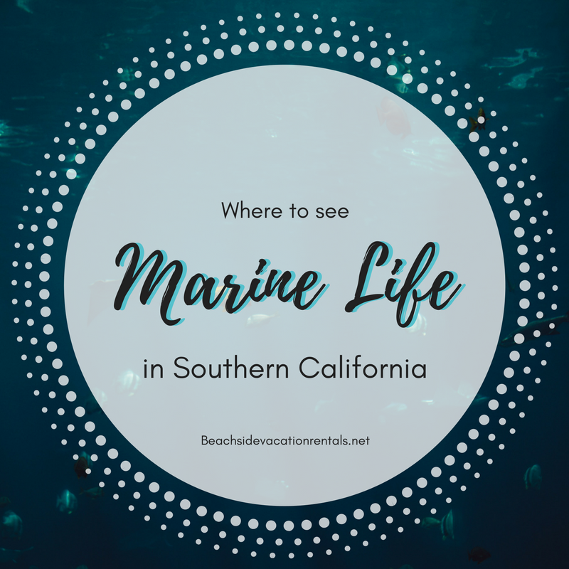where to see marine life in Southern California  Beachside Vacation Rentals