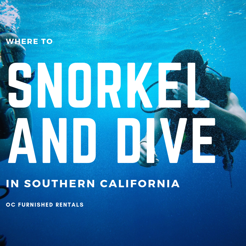 snorkel and dive in southern california