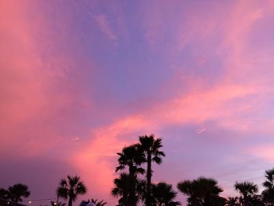 Photo of cotton candy pink sky with palm trees on the bay villa grove properties